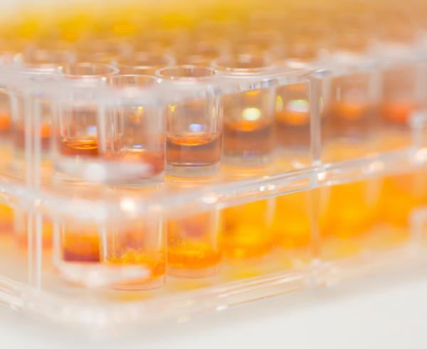 Assay development, Scientistst against malaria