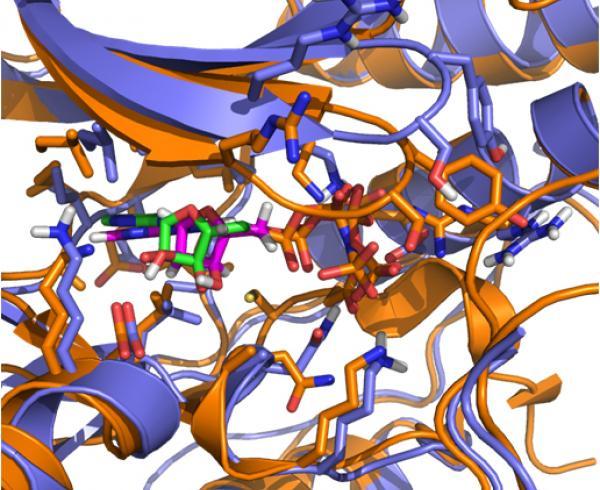 PfMAP2 crystal structure model.jpg