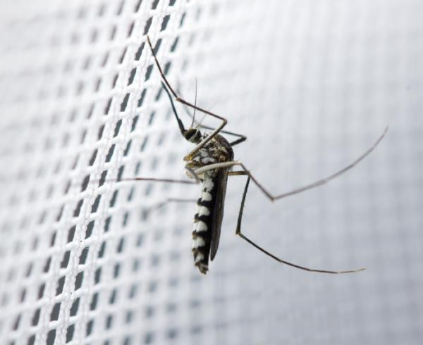 How to reduce malaria transmission