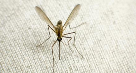 Malaria parasite requires specific human and mosquito tissues